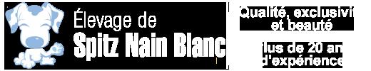Spitz Nain Blanc